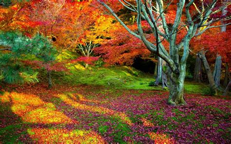 amazing color for the fall landscape landscaping ideas arboles con hojas de colores hd 1920x1200 imagenes