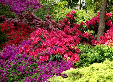 colourful shrubs flickr photo