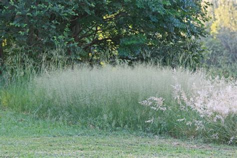 soft grass seeds and trees free stock photo