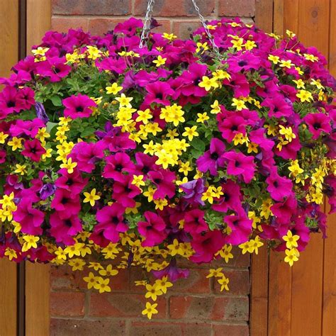 78 ideas about hanging pots on pinterest hanging pans petunia and bidens chagne and gold cocktail mix patio