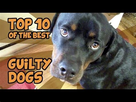 download hair of the dog mp3 download the top 10 guiltiest guilty dogs of all time