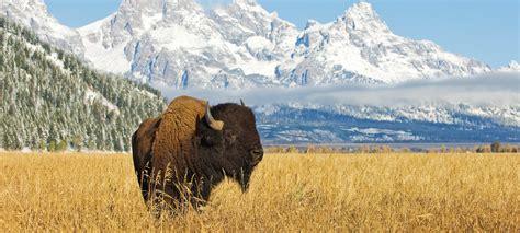 map us to canada home canadian rangeland bison amp elk