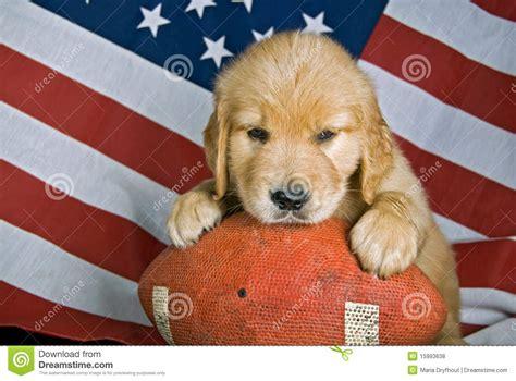 golden retriever football retriever on football royalty free stock photos image 15993638
