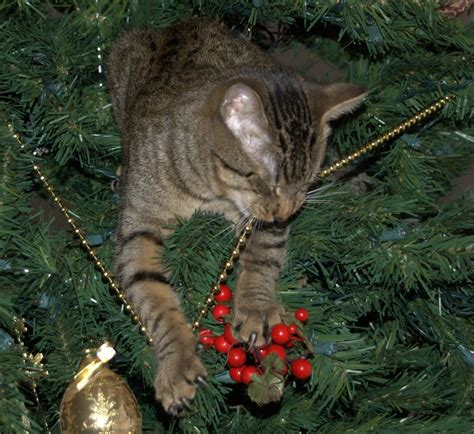 funny wayscto keep cats off christmas tree cats in trees 42 pics