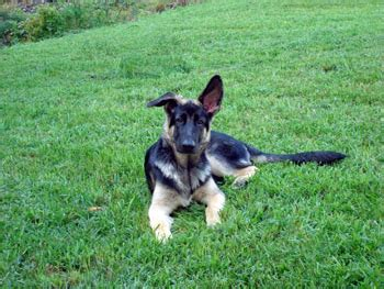 5 month puppy behavior 5 stages of puppy development you need to