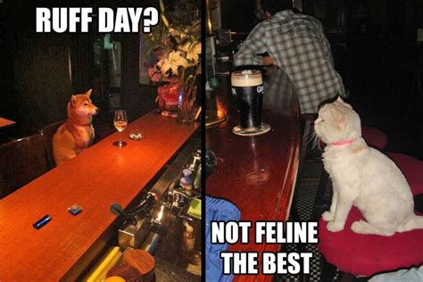 Top Cat Bar by Ruff Day