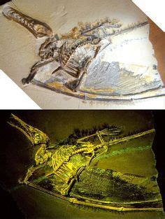 Fossil F 3426 543 best images about reptiles volants on