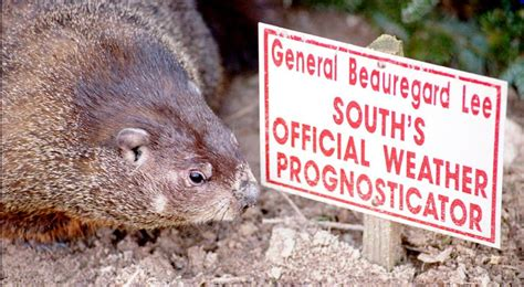 groundhog day yellow river ranch groundhog day in general beauregard predicts