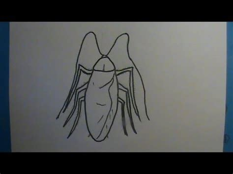tutorial menggambar sonic video how to draw a roach cockroach