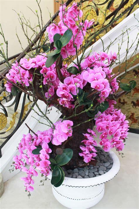 Pot Anggrek Bulan jual bunga anggrek bulan irene s florist