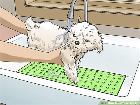how to bathe a shih tzu 3 ways to bathe a shih tzu wikihow