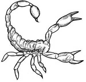 scorpion colors free printable scorpion coloring pages for