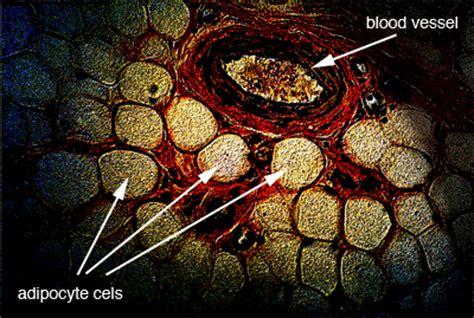 Lipids In Stool by Biodotedu