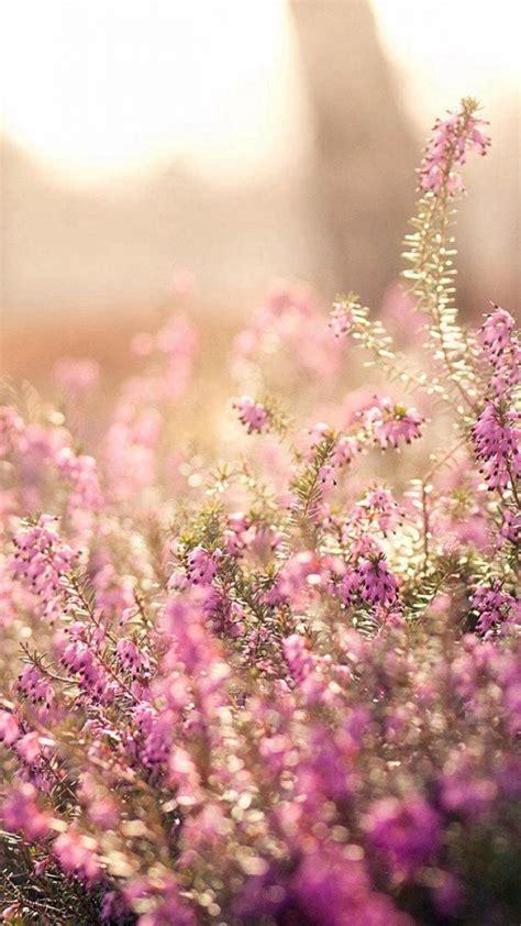 Blume Mit Rosa Blüten by Die 71 Besten Rosa Blumen Hintergrundbilder
