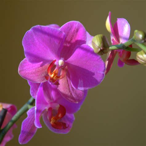 la flor ms bella del co la orqu 237 dea la flor m 225 s bella del mundo arte taringa
