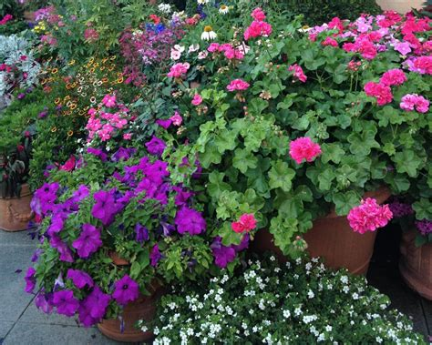 How To Choose Plant And Grow Annuals Hgtv Garden Flowers Annuals