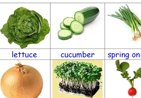 vegetables used in food what vegetable is used for salad pre diabetes diet foods
