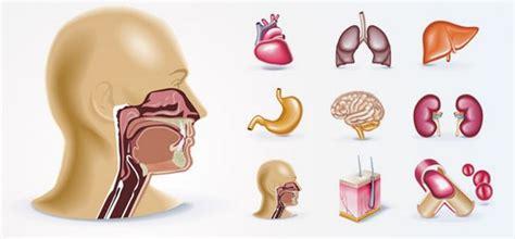 imagenes reales de organos del cuerpo humano 9 243 rganos del cuerpo humano vectorizados