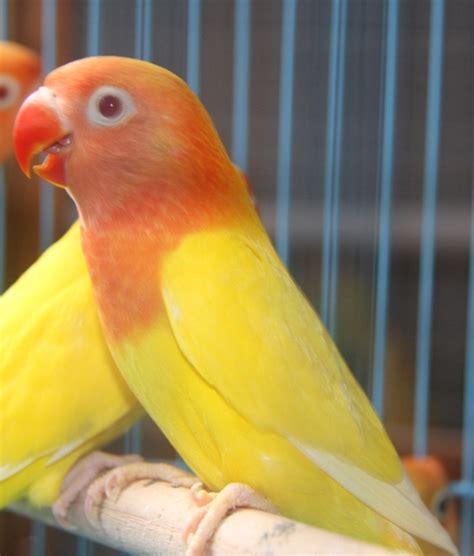 Tempat Makan Burung Anti Berantakan aneka manfaat spirulina