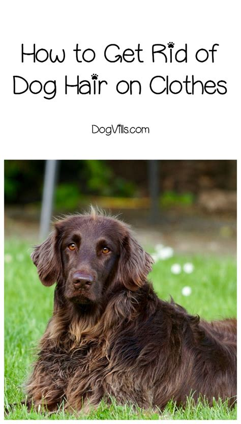 How To Get Rid Of Dog Hair On Clothes Dogvills