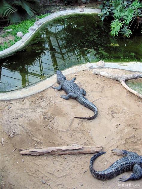 zoologischer garten berlin krokodile der tierpark berlin mit gro 223 er bildergalerie inberlin