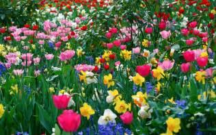 Study Of Flower Colours In The Garden Colorado Grown Flowers Hoffman Farms Llc