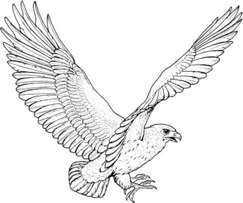 Black Hawk Outline by Hawk Outline Pictures To Pin On Pinsdaddy