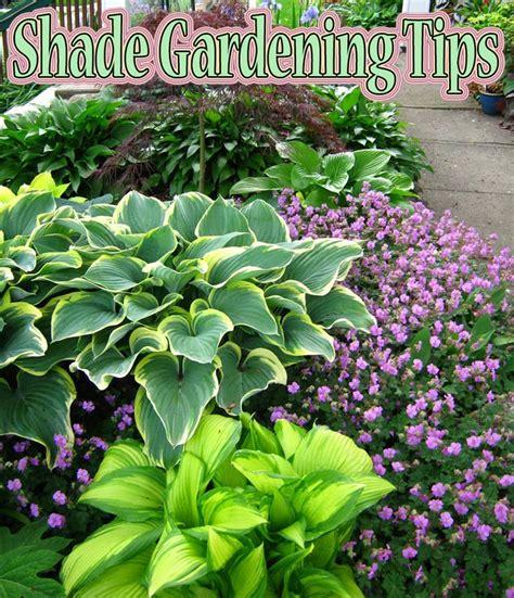 Gardening Advice Shade Gardening Tips Corner