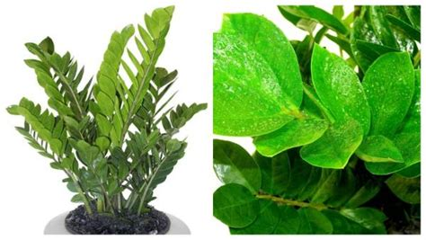 plants that need very little sunlight top 3 trends for indoor plants stuff co nz
