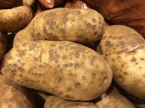 Potato Means by Poss Lenticel Rot Of Potatoes Lenticel Rot Of Potato