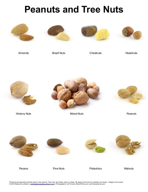 tree fruit allergy list peanuts and tree nuts poster