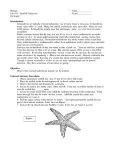 Lab Starfish Dissection
