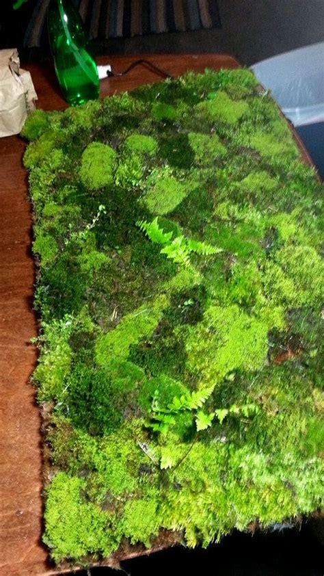 Live Moss Bath Mat by 25 Best Ideas About Moss Bath Mats On Shower