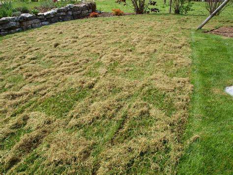 Nach Dem Vertikutieren by Richtiges Vertikutieren Rasen Im Fr 252 Hling