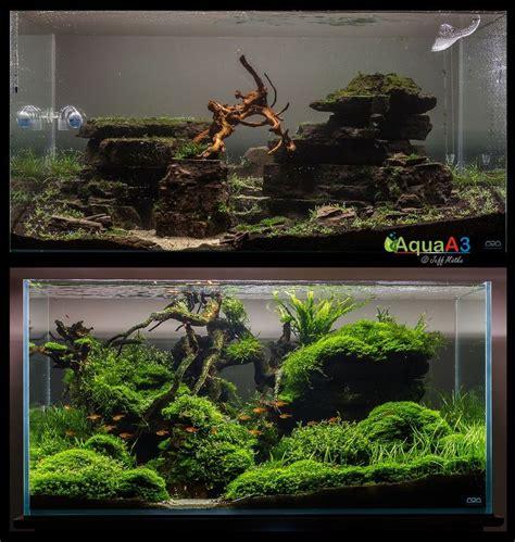 aquascape ideas tropical 183 best images about aquaria on pinterest cichlids