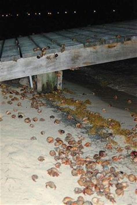 hermit crab heat l all living things 174 hermit crab heat l bulbs ls