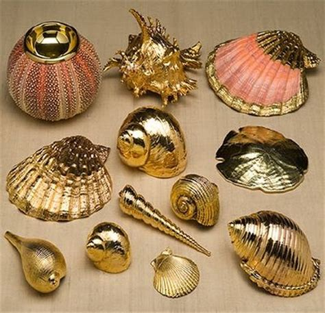 Sea Shell Badezimmer by 25 Best Ideas About Shells On Sea Shells