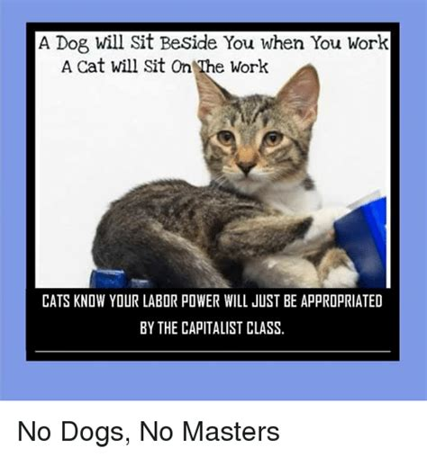 Working Cat Meme - a dogs will sit beside you when you work a cat will sit on