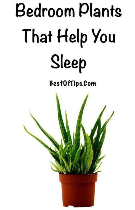 Bedroom Plants To Help Sleep Bedroom Plants That Help You Sleep Sleep Plants And