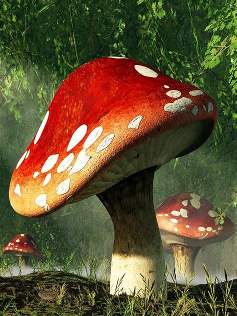 Tv House Floor Plans by Mystic Mushroom Digital Art By Daniel Eskridge