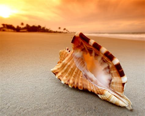 shell wallpaper shell wallpaper hd 34309 1600x1280 px hdwallsource com