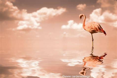 flamingo wallpaper images flamingo wallpapers wallpaper cave