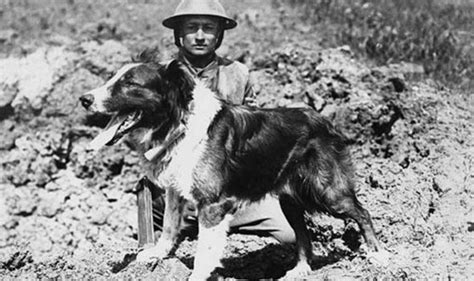 1st World War Records Wartime Records Show 20 000 Dogs Helped Front Line Soldiers In World War Wwi
