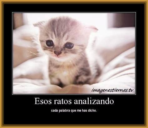imagenes romanticas de gatos fotos de gatos con frases para facebook archivos gatitos