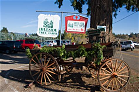 christmas tree places apple hill ca hillside tree farm apple hill camino california