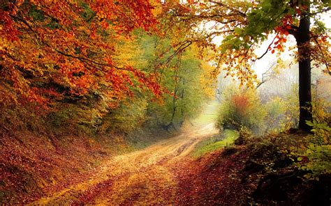 beautiful autumn road wallpapers hd wallpapers id