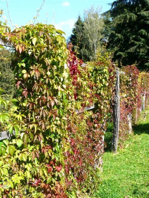 Pflanzen F R Hecke 640 by Hecken Gartenratgeber
