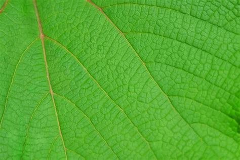 Imagenes Hojas Verdes | image gallery hojas verdes 4