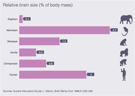 size of brain human brain size compared to animals