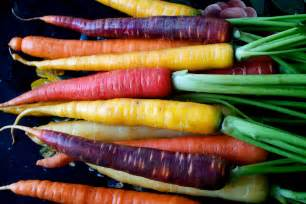carrot colors the root of the matter tubers bulbs and taproots the